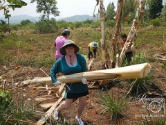 Elephant Nature Park - Sheila hauling banana trees