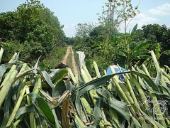 Elephant Nature Park - view from corn truck