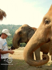 Elephant Nature Park - feeding a healthy mix
