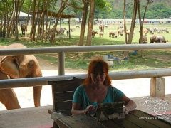 Elephant Nature Park - trying to work, when an elephant walks into my office