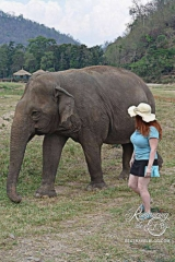 Elephant Nature Park - Sheila