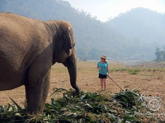 Elephant Nature Park - morning girl chat