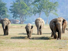 Elephant Nature Park - slow stampede