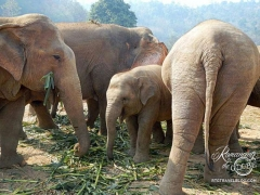 Elephant Nature Park - family visit