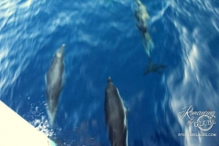 Dolphins before coffee