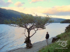 Loch Lomond - Don't you love this scrappy little tree