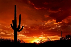Saguaro Sunset by Saguaro Pictures