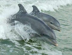 Dolphins - This photo provided by our excursion hosts Dolphin Explorer