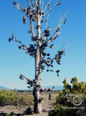Anyone know the story of this Shoe Tree?